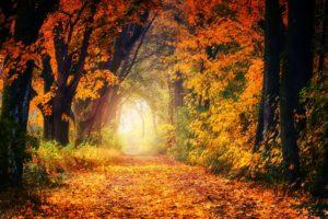 ООД по развитию речи. «Ранняя осень в картине И.И.Левитана»